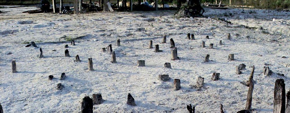 Prehistoric wooden pillars at Lake Chalain, France - Credit: Centre de Recherche Archéologique de la Valleé de l'Ain